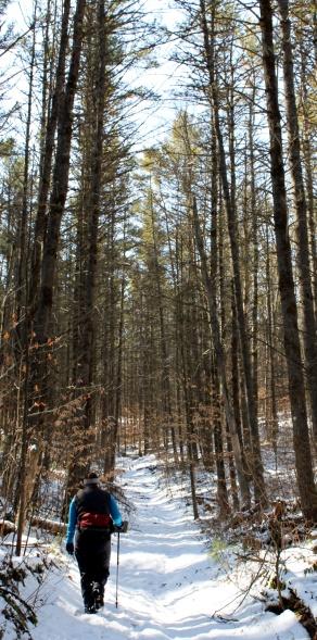 Sentinel Pine Trail